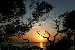 Mening van de overzeese zonsondergang door de donkere silhouetten van boomtakken Stock Foto's