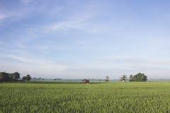 Mening van de padievelden in de ochtend royalty-vrije stock afbeeldingen