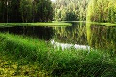 Mening van de rivier in Finland Stock Afbeeldingen