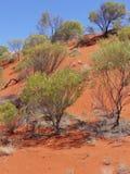 Mening van de rode aarde van het binnenland van Australië Stock Foto