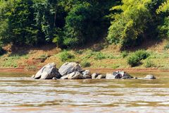 Mening van de stenen op de rivier Nam Khan, Luang Prabang, Laos Exemplaarruimte voor tekst royalty-vrije stock foto