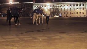 Mening van de straat van de nachtstad Vrouwengang met twee paarden stock videobeelden