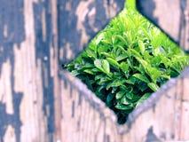 Mening van de tuin Royalty-vrije Stock Foto's