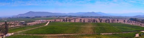 Mening van de wijngaard Royalty-vrije Stock Afbeeldingen