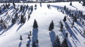 Mening van de de winter behandelde de lucht4k hommel van sneeuw sparren, bos in de bergen stock footage