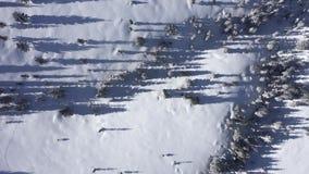 Mening van de de winter behandelde de lucht4k hommel van sneeuw sparren, bos in de bergen stock videobeelden
