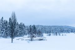 Mening van de Winter bevroren meer met pijnboombos royalty-vrije stock afbeelding