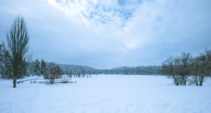 Mening van de Winter bevroren meer met pijnboombos royalty-vrije stock fotografie