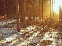Mening van de winter bos, Zuidelijke Bohemen Stock Fotografie