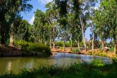 Mening van de zomerpark Yarkon Stock Foto