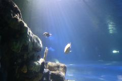 Mening van diep van oceaan royalty-vrije stock foto