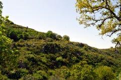 Mening van een groen landschap Stock Foto