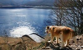 Mening van een hond en een meer Royalty-vrije Stock Fotografie