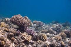 Mening van een koraalrif Royalty-vrije Stock Afbeeldingen
