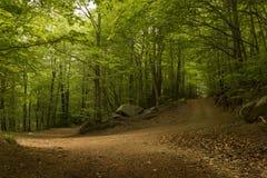 Mening van een landweg in het groene bos Stock Foto
