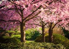 De kleuren van de lente Royalty-vrije Stock Foto's