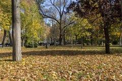 Mening van een park in Krasnodar, Rusland Onder Koppen-klimaatcl Stock Foto's