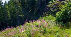 Mening van een ravijn in het bos, de zomer stock footage
