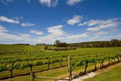 Mening van een wijngaard Royalty-vrije Stock Foto's