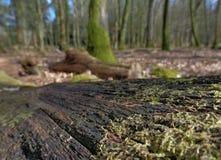 Mening van Forest Floor Stock Afbeeldingen