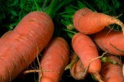 Ruwe wortelen Royalty-vrije Stock Afbeeldingen