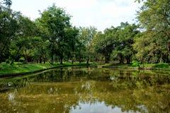 Mening van groene bomen in het park Stock Afbeelding