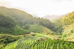 Mening van groene gebieden Royalty-vrije Stock Afbeeldingen
