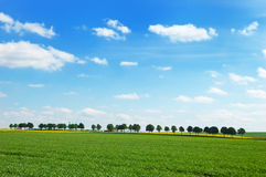 Mening van groene weiden met raapzaadgebied Royalty-vrije Stock Fotografie