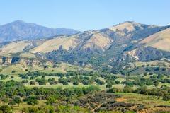 Mening van Helling in Noordelijk Californië De zon schilderde de ronde gevormde bomen met verbazende mooie aangestoken randen Royalty-vrije Stock Foto's