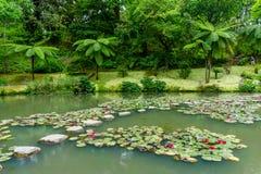 Mening van het aardpark van Terra Nostra, in Sao Miguel i wordt gevestigd die royalty-vrije stock fotografie
