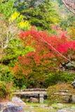Mening van het de herfstlandschap in het park, Kyoto, Japan Exemplaarruimte voor tekst verticaal royalty-vrije stock afbeelding