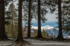 Mening van het dichte naaldbos aan de snow-capped pieken van de bergen Royalty-vrije Stock Afbeeldingen