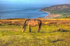 Mening van het Exmoor de nationale park met poney aan de kust van Porlock Somerset in de zomer in hdr royalty-vrije stock foto's