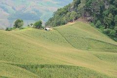 Mening van het graangebied op de berg Royalty-vrije Stock Foto