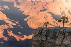 Mening van het Grote Nationale Park van de Canion Stock Fotografie