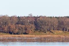 Mening van het meer in de lente Royalty-vrije Stock Afbeeldingen