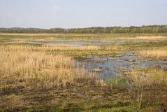 Mening van het moeras en het bos op de achtergrond Royalty-vrije Stock Foto