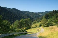 Mening van het Nationale Park Pieniny. royalty-vrije stock afbeeldingen