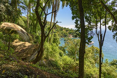 Mening van het overzees door het regenwoud Royalty-vrije Stock Afbeeldingen