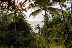 mening van het overzees door palmen stock afbeeldingen