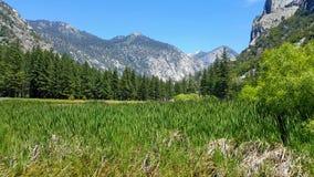 Mening van het sequoia de nationale park Stock Foto