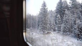 Mening van het treinvenster De winterbos in de sneeuw Noordelijk koud landschap De bevroren close-up van pijnboombomen Mooi stock footage