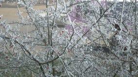 Mening van het venster op briar Vorstboom stock videobeelden