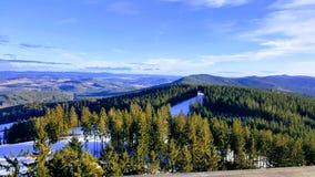 Mening van het Vooruitzicht van Lipno van Sleepbomen, Czechia stock foto's