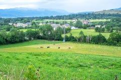 Mening van het weiland van de koeien op het gebied Royalty-vrije Stock Fotografie