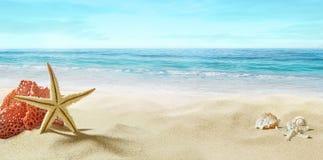 Mening van het zandige strand Koraal in het zand royalty-vrije stock foto