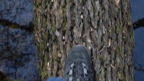 Mening van hierboven over voeten van een persoon die op gevallen boomboomstam lopen stock video