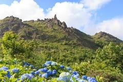 Mening van hydrangea hortensiabloem en Usu -usu-zan berg, een actieve vulkaan Stock Fotografie