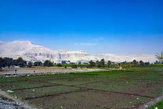 Mening van land binnen gewijd aan landbouw naast de rivier van Nijl royalty-vrije stock afbeelding