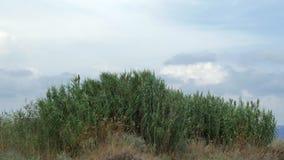 Mening van landbouwgebied met lang gras in winderig weer bij de zomer stock videobeelden